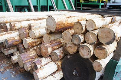 買取可能な木材